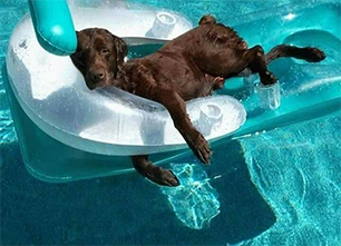 funny dog lounging in pool